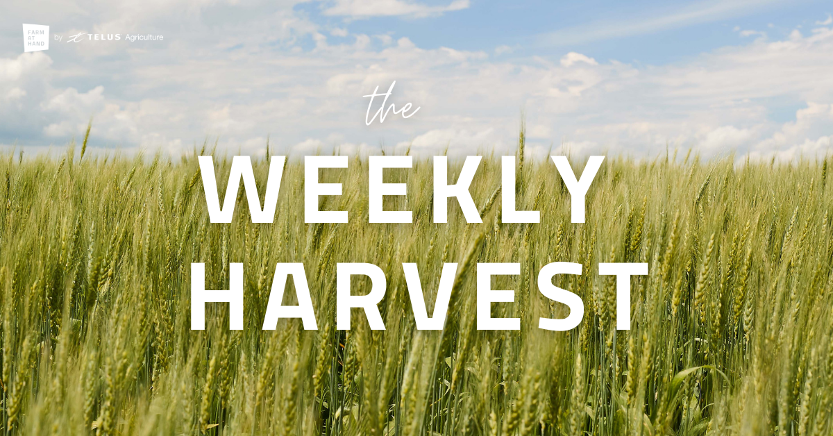 crop with blue sky and text that says weekly harvest
