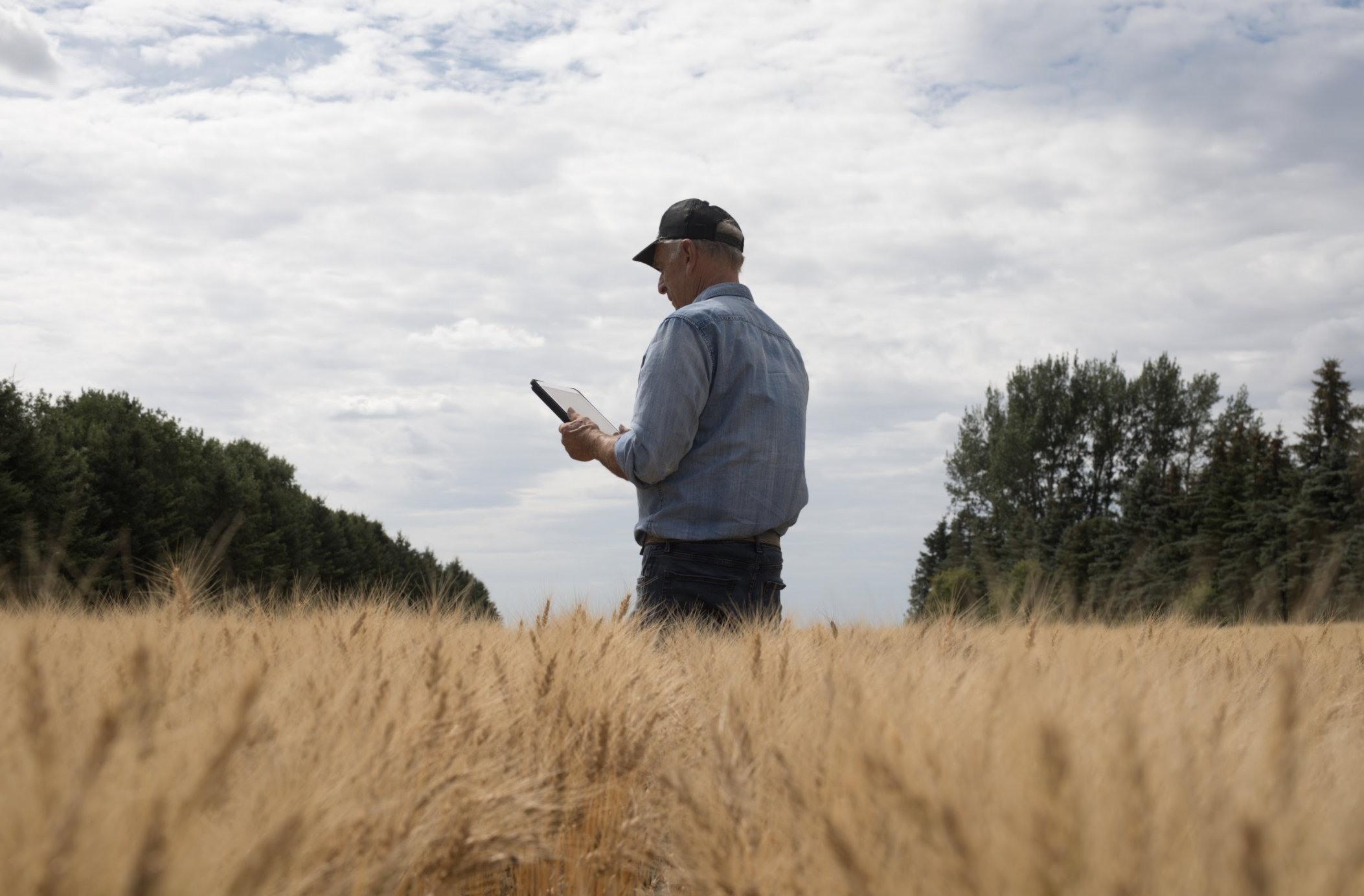 Old farmer in a field looking at his ipad.